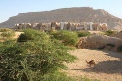 Camelo na área de Shibam imagem de stock
