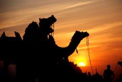 CAMELO NA SILHUETA NA VILA BIKANER DE LADERA Foto de Stock Royalty Free