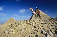 Camelo Rider By Pyramids Of Giza Foto de Stock