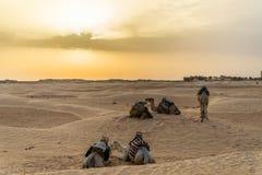 Camelo Tunísia Foto de Stock