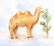 Camelo two-humped da aquarela bonito com arbusto Fotos de Stock