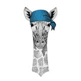 Camelopard, bandana dell'animale selvatico della giraffa o bandana o immagine d'uso del bandanna per il pirata Seaman Sailor Bike Immagine Stock
