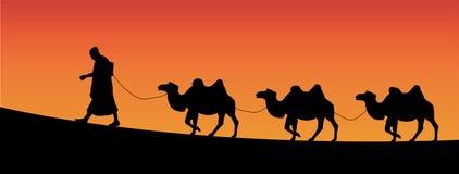 Camelos Fotografia de Stock Royalty Free