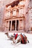Camelos de PETRA Fotografia de Stock Royalty Free