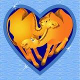 Camelos do amor do vetor Fotografia de Stock