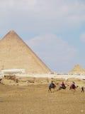 Camelos em pirâmides de Giza Imagem de Stock