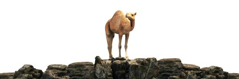 Camelos em um por do sol bonito 3d ilustração royalty free