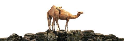 Camelos em um por do sol bonito 3d ilustração stock