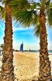 Camelos em uma praia de Dubai fotos de stock