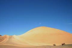 Camelos em Xinjiang, China Fotos de Stock Royalty Free