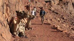 Camelos. Monte Sinai. Egito vídeos de arquivo