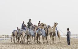 Camelos no al Khali Desert da RUB no quarto vazio, em Abu Dhabi Fotos de Stock Royalty Free