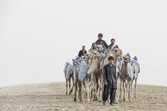 Camelos no al Khali Desert da RUB no quarto vazio, em Abu Dhabi Imagem de Stock Royalty Free