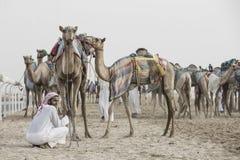 Camelos no al Khali Desert da RUB no quarto vazio, em Abu Dhabi Fotografia de Stock Royalty Free