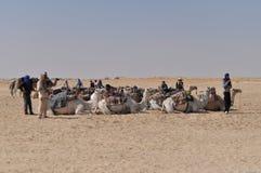 Camelos no deserto Fotografia de Stock Royalty Free