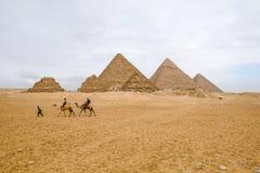 Camelos que andam na frente das pirâmides em Giza Fotos de Stock Royalty Free