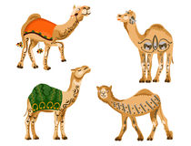 Camels. Four decorated camels on a white background Royalty Free Stock Images