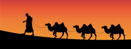 Camels. Vector illustration of camels walking in the desert Royalty Free Stock Photography