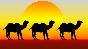 Camels. An illustration of three camels crossing the desert Royalty Free Stock Images
