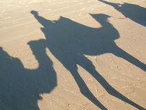 Camels. Camel ride shadows on the sand Stock Photo