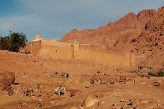 camels on the background of the ancient ruins of fortress-monastery royalty free stock photography
