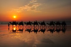 Camels on the beach by sunset Broome Australia Stock Photo