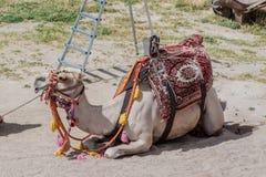 Camels in Cappadocia Turkey Stock Photos