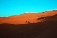 Camels caravan in the desert. Sahara safari: shadow on the sand dunes of tourists riding dromedary Stock Photo