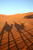 Camels caravan in the desert. Sahara safari: shadow on the sand dunes of tourists riding dromedary Stock Images