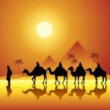 Camels caravan Stock Image