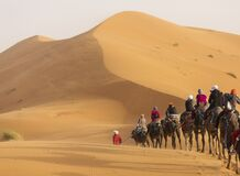 Free Camels Caravan In The Dessert Of Sahara With Beautiful Dunes In Background. Morocco Stock Images - 182542234