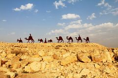 Camels caravan in the Negev desert, En Avdat National Park Royalty Free Stock Photography