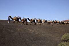Camels caravan Timanfaya Park  Lanzarote. A Camels caravan returning home in the evening with the camel guardian on volcano dunes Royalty Free Stock Photos