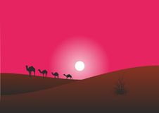 Camels are in the desert. The caravan of camels moves in  the desert Royalty Free Stock Photo