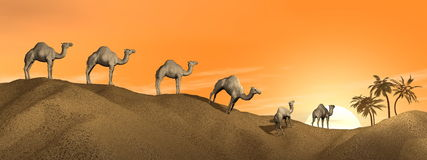 Camels in the desert Royalty Free Stock Photography