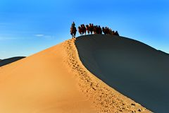 Camels in the desert. ,china Royalty Free Stock Image