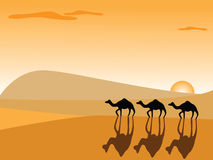 Camels in the desert. At sunset Stock Photos