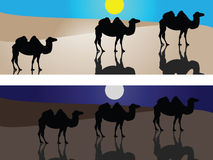 Camels in desert. Under sun or in the night. Eps8, vector, easy resizing or change colors Stock Photos