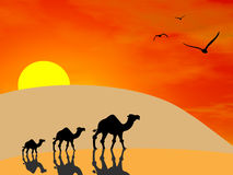 Camels In The Desert. 3d image of camels silhouettes in the desert at sunset Royalty Free Stock Images