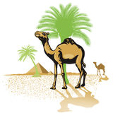 Camels in desert. Illustration of camels in desert with palm trees and pyramids in background Royalty Free Stock Images