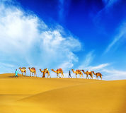 Camels. Desert landscape. Adventure travel background Royalty Free Stock Photography