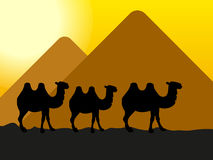 Camels. In the desert at the pyramids stock illustration