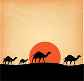 Camels design Royalty Free Stock Images