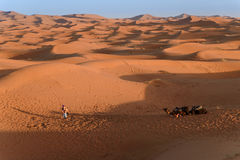 Camels at the dunes, Morocco, Sahara Desert Stock Photo