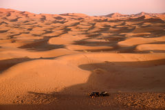 Camels at the dunes, Morocco, Sahara Desert Royalty Free Stock Photography