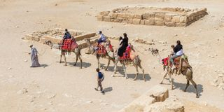 Camels forced to haul tourists in Egypt with no relief royalty free stock photo