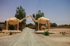 Camels form the gateway to the hotel, Sahara, Morocco Royalty Free Stock Image