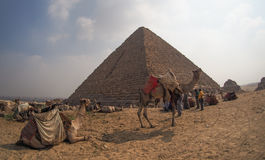 Camels in front of Giza pyramids, Egypt Stock Photo