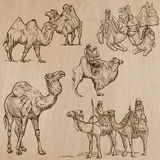 Camels - An hand drawn vectors. Converted Royalty Free Stock Images