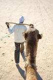 Camels head Stock Photography
